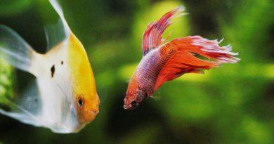 coolest-freshwater-aquarium-fish-varieties
