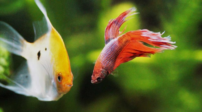 coolest-freshwater-aquarium-fish-varieties