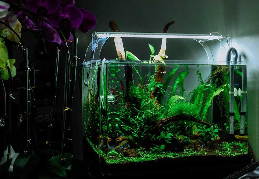 fish-aquarium-tank planted