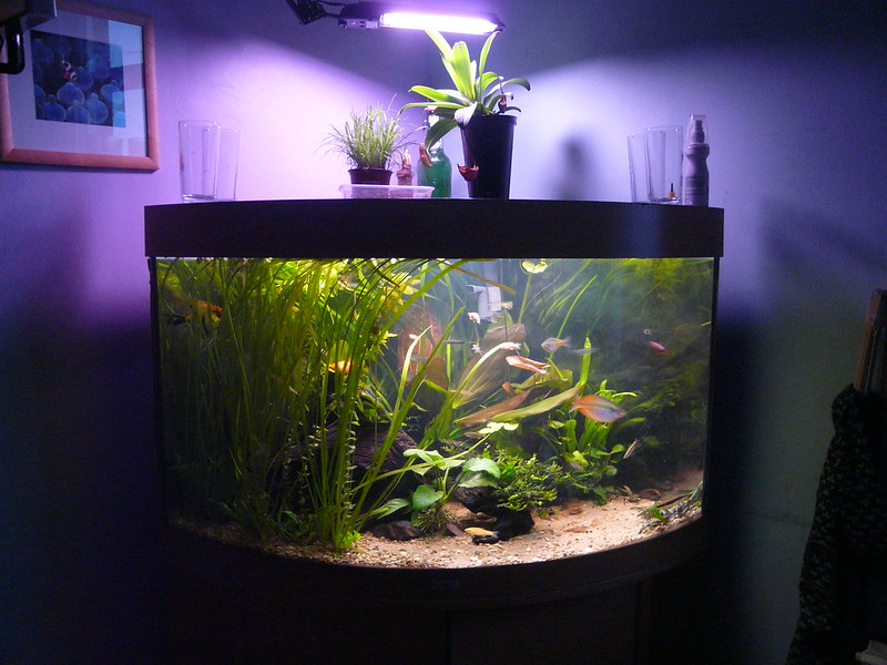 fish-tank-flicker-Emilia-Murray