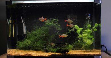 fish-tank-flicker-Robert-Howie